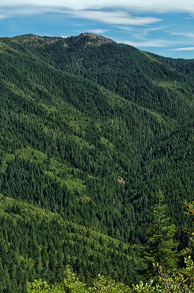 OR: Curry County, Coast Range, Rogue River Area, Bear Camp Coastal Route. Mature Douglas fir forests cover the higher elevations of this notoriously difficult scenic byway [Ask for #274.715.]