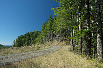 OR: South Coast Region, Coos County, Coast Range, Elliott State Forest, The Ridgetop Drive, FR 1000, The forest road passes briefly through Weyerhauser's Millacoma Tree Farm, with views from a newly replanted clearcut [Ask for #274.A44.]
