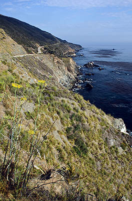 CA: South Coast Region, Monterey County, Los Padres National Forest, Big Sur, Big Creek Area, Cliff view from along the Pacific Coast Highway [Ask for #271.070.]
