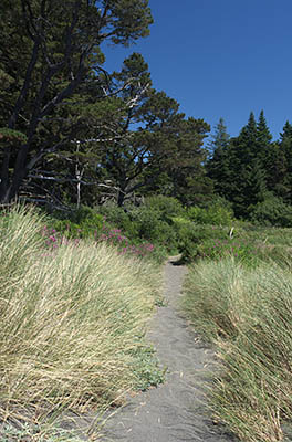 OR: South Coast Region, Curry County, North Coast, Port Orford Area, Town of Port Orford, Port Orford Heads State Park, A footpath crosses the dunes that abut the south end of Port Orford Head [Ask for #274.407.]