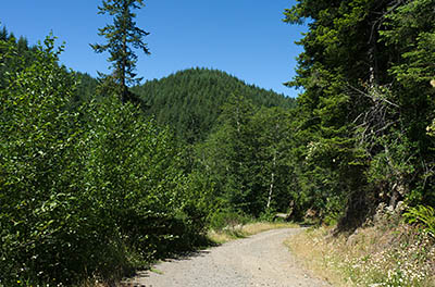 OR: South Coast Region, Coos County, Coast Range, Elliott State Forest, Millicoma River Area, FR 2300, This gravel forest road descends from FR 2000 (the western mainline road) towards the West Fork of the Millacoma River using rock cuts; wildflowers [Ask for #274.487.]
