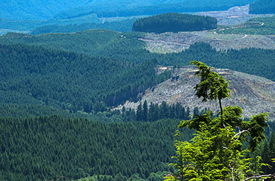 OR: South Coast Region, Coos County, Coast Range, Elliott State Forest, Southeastern Quadrant, FR 1000, Clearcuts on the adjacent Millicoma Tree Farm, owned by Weyerhauser, viewed from this ridgetop mainline road in the state forest. [Ask for #274.494.]
