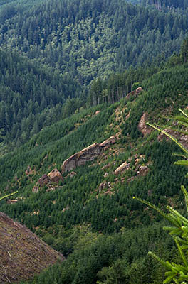 OR: South Coast Region, Coos County, Coast Range, Elliott State Forest, Southeastern Quadrant, FR 1000, Vertical sandstone sheets form outcrops in a clearcut; view from the road's right-of-way. [Ask for #274.594.]