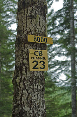 OR: South Coast Region, Coos County, Coast Range, Elliott State Forest, The Ridgetop Drive, FR 1000, A sign marks its intersection with FR 8000 in a Douglas Fir forest [Ask for #274.597.]