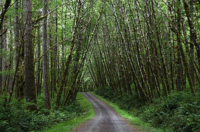 OR: South Coast Region, Coos County, Coast Range, Elliott State Forest, Millicoma River Area, FR 8000, The road passes through a stand of very young hardwoods [Ask for #274.603.]
