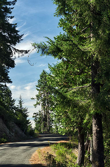 OR: Curry County, Coast Range, Rogue River Area, Bear Camp Coastal Route. Douglas fir forests line the higher elevations of this notoriously difficult scenic byway; this photo is of the high point, 4,750 ft, on Bear Camp Ridge [Ask for #274.719.]