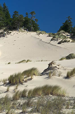 Sand dunes in the Oregon Dunes field, just north of Coos Bay. This is on a Weyerhaeuser tract adjacent to the Oregon Dunes National Recreation Area and open to the public.