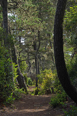 OR: South Coast Region, Coos County, Northern Coastal Area, Oregon Dunes National Recreation Area, Horsfall Recreation Area, Bluebill Lake Trail, Footpath leads through mature dune forests [Ask for #274.975.]