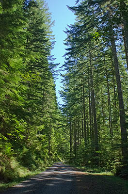 OR: South Coast Region, Coos County, Coast Range, Elliott State Forest, The Ridgetop Drive, FR 1000, This mainline forest road passes through a young fir forest [Ask for #274.A48.]