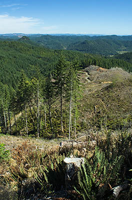OR: South Coast Region, Coos County, Coast Range, Elliott State Forest, The Ridgetop Drive, FR 7000, View from the top of a clearcut eastward over the Loon Lake and Camp Creek areas [Ask for #274.A55.]