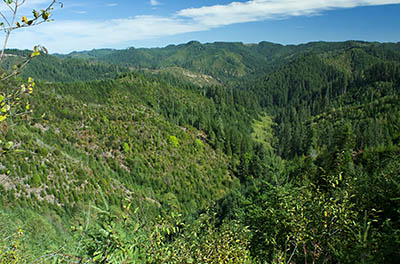 OR: South Coast Region, Coos County, Coast Range, Elliott State Forest, The Ridgetop Drive, FR 2000, View from this logging mainline over the West Fork Millacoma River Valley [Ask for #274.A80.]